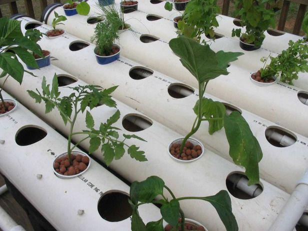 Esse sistema hidropônico consiste em seis linhas de cultivo feitas com tubos de PVC, treliças de sustentação feitas também com tubos de PVC, um tanque para
