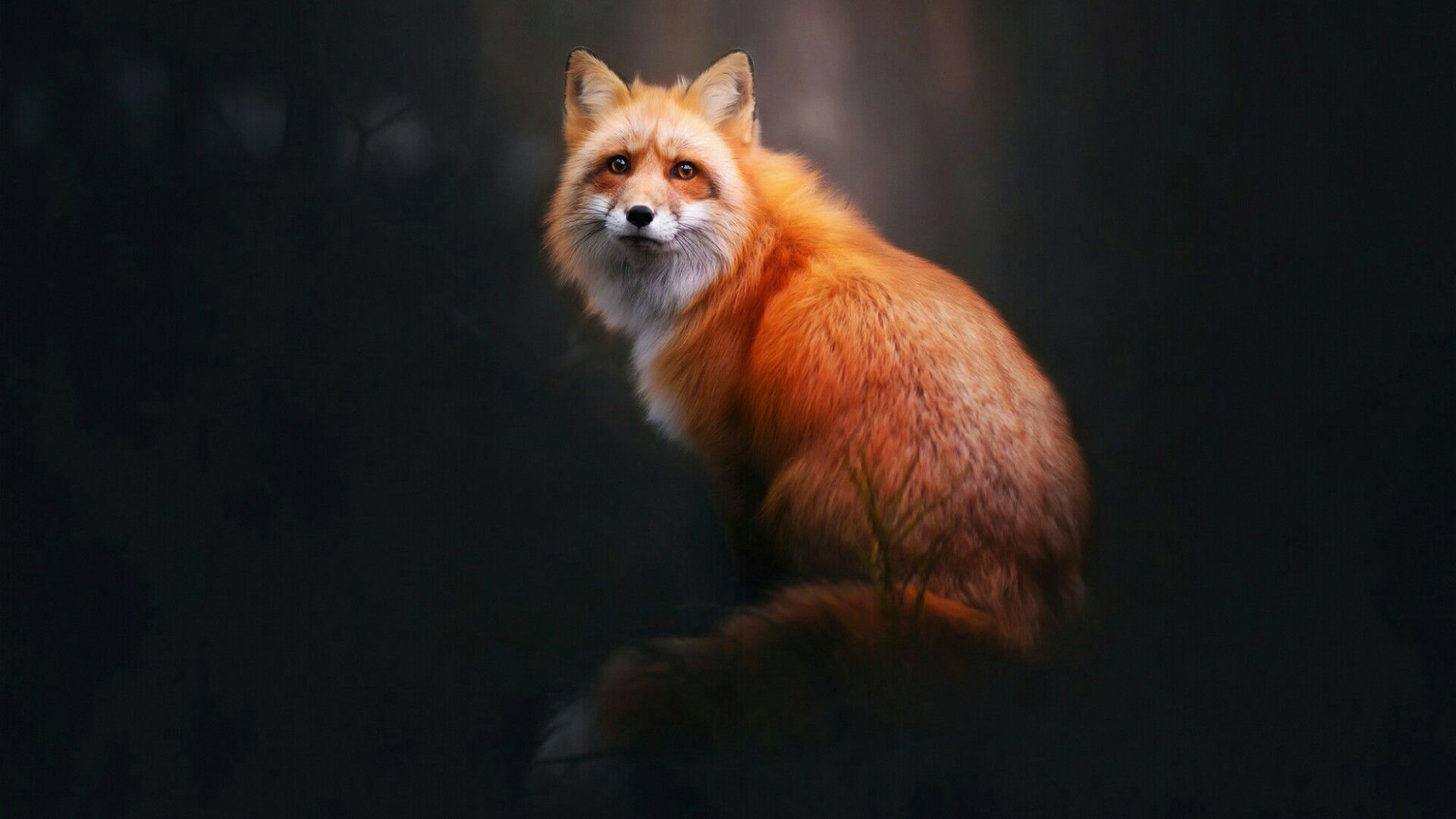 Red Fox Wallpaper Wallpaper Studio 10 Tens of