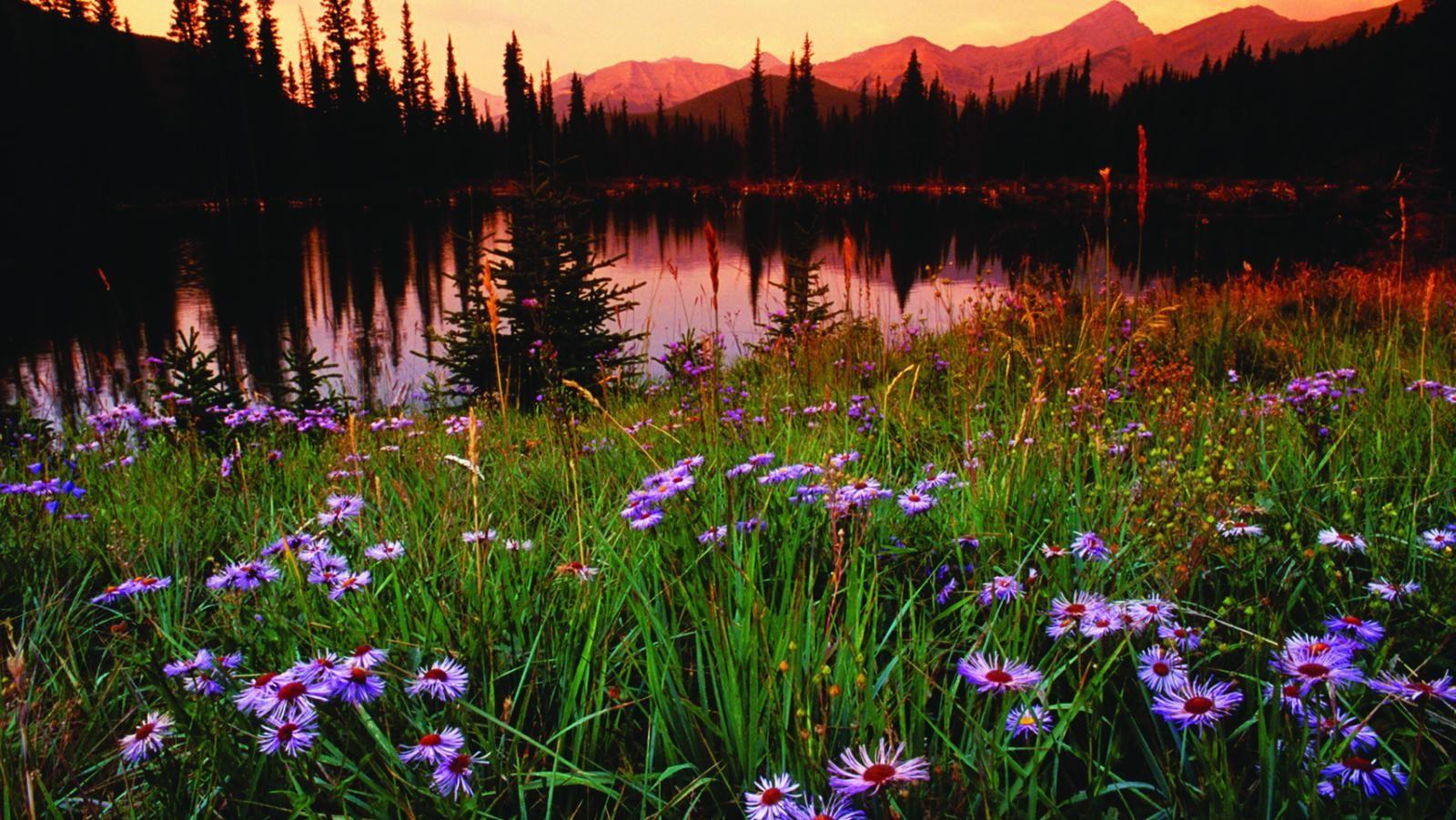 Mountain Lake & Meadow   Winter park colorado, Winter park ...