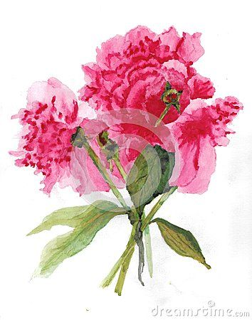 Peony Flower Watercolor
