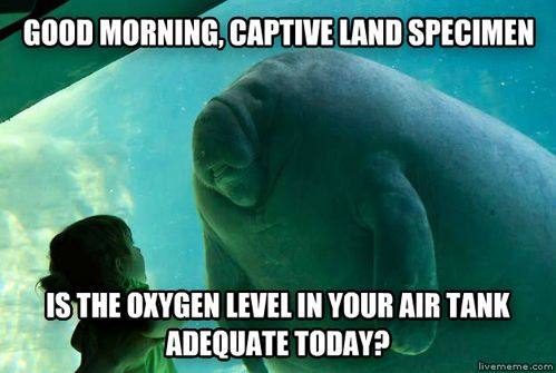 What a manatee must think when he sees us though the glass panel