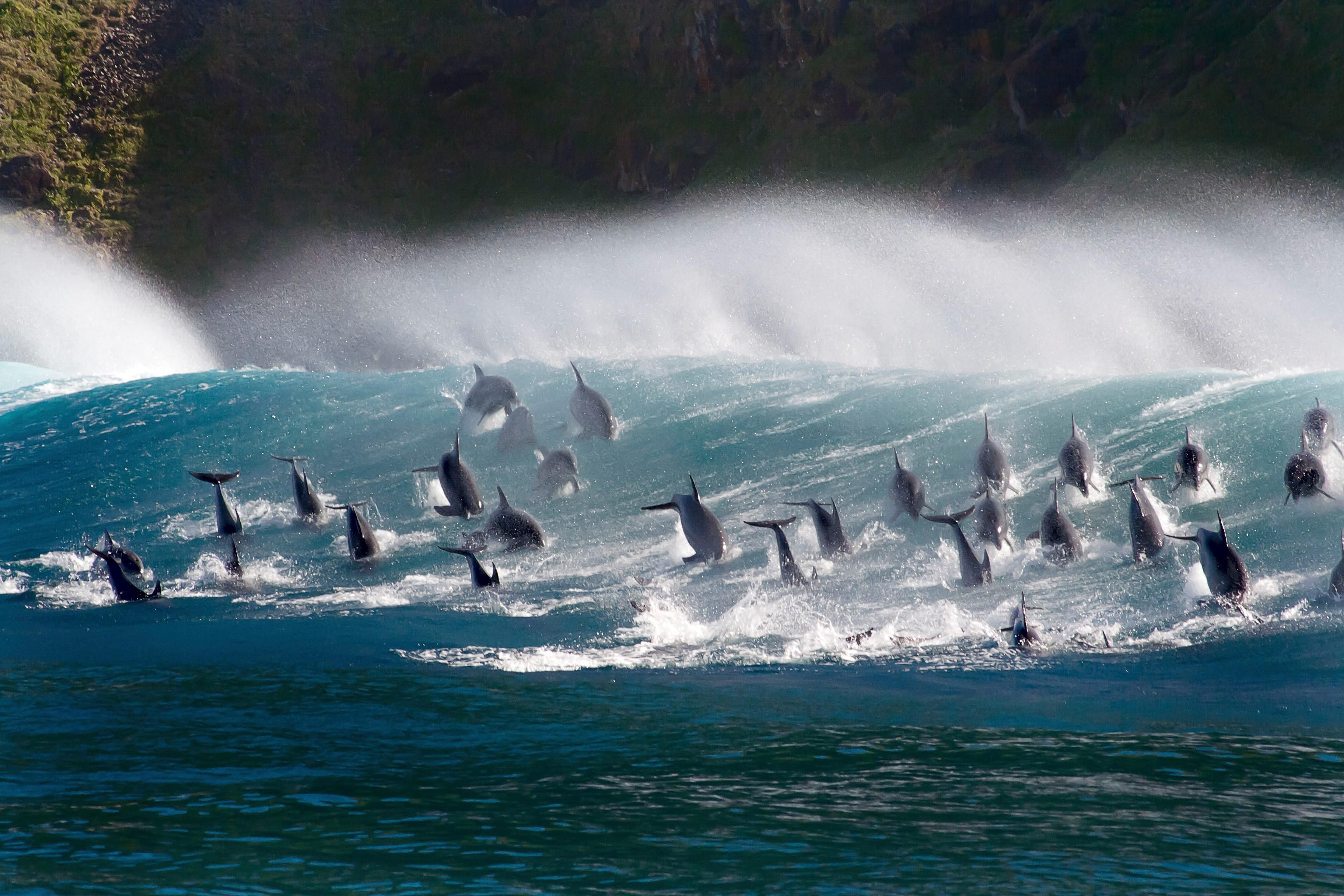 David Attenborough On The Scourge Of The Oceans I