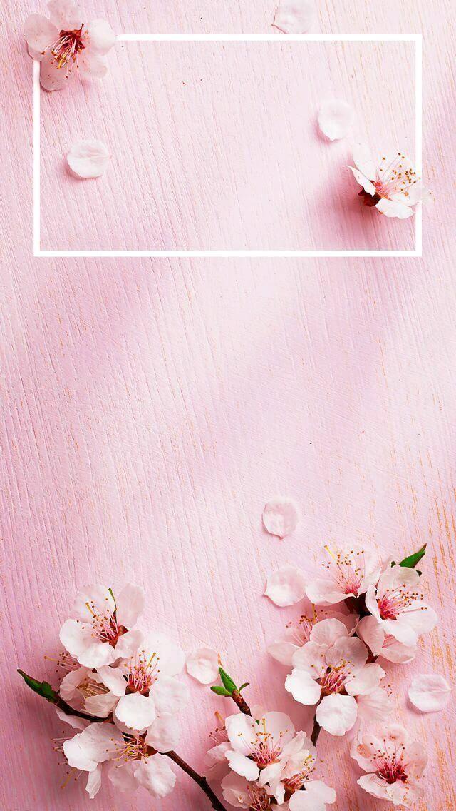خلفيات وردية Pink Wallpaper Iphone Spring Wallpaper Spring Wallpaper Rose Gold Wallpaper