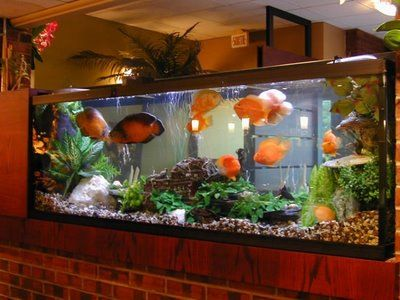 Fish Aquarium Design Aquarium Fish Saltwater Fish Tanks Big