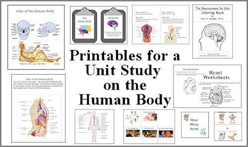 Worksheet Human Body Systems Worksheets 1000 images about homeschool human body on pinterest apologia anatomy and systems