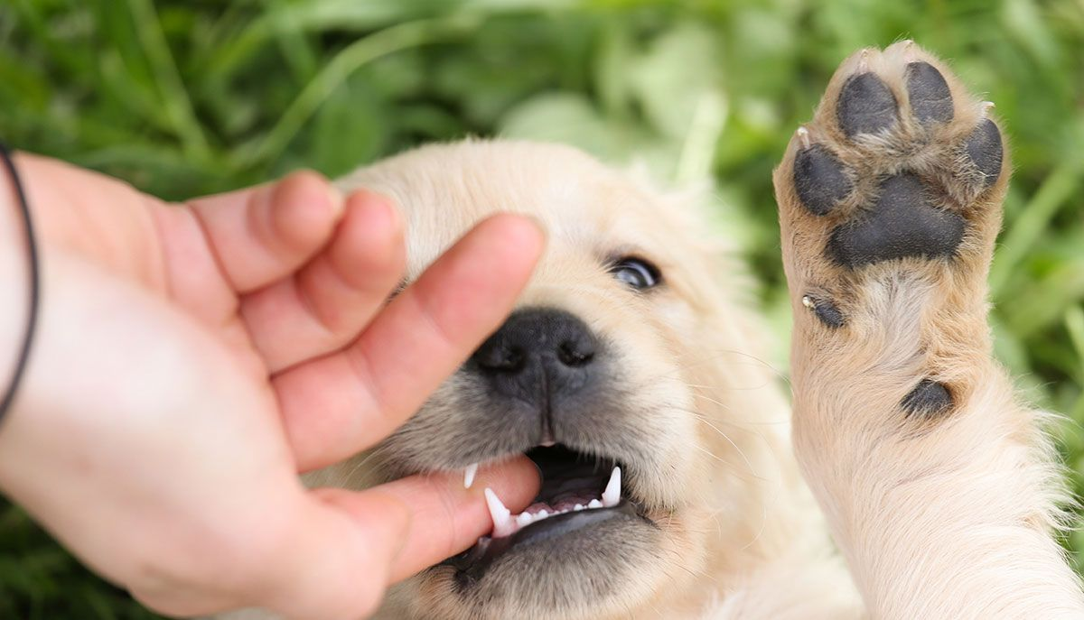 How To Stop A Puppy From Biting Your Puppy Biting Guide Puppy