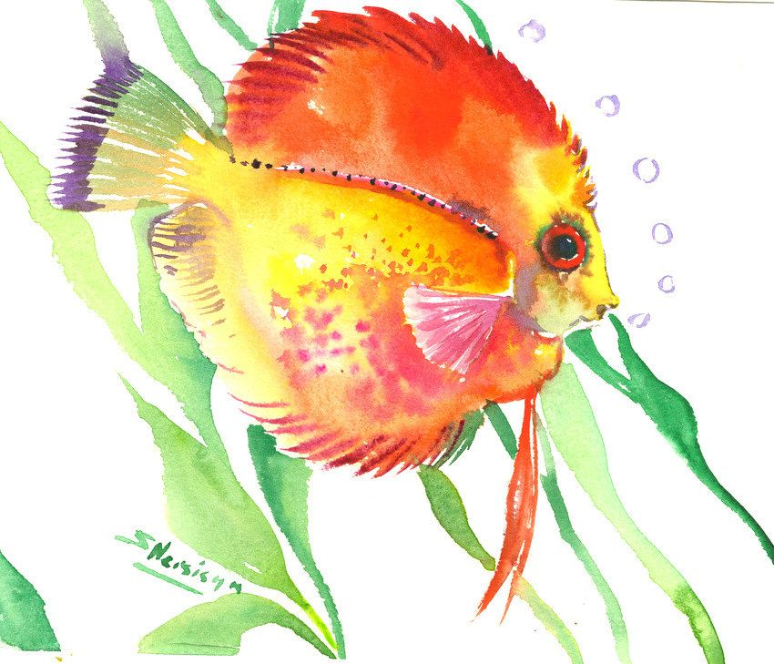 Yellow Discus Original Watercolor Painting 8 X 10 In Red Yellow