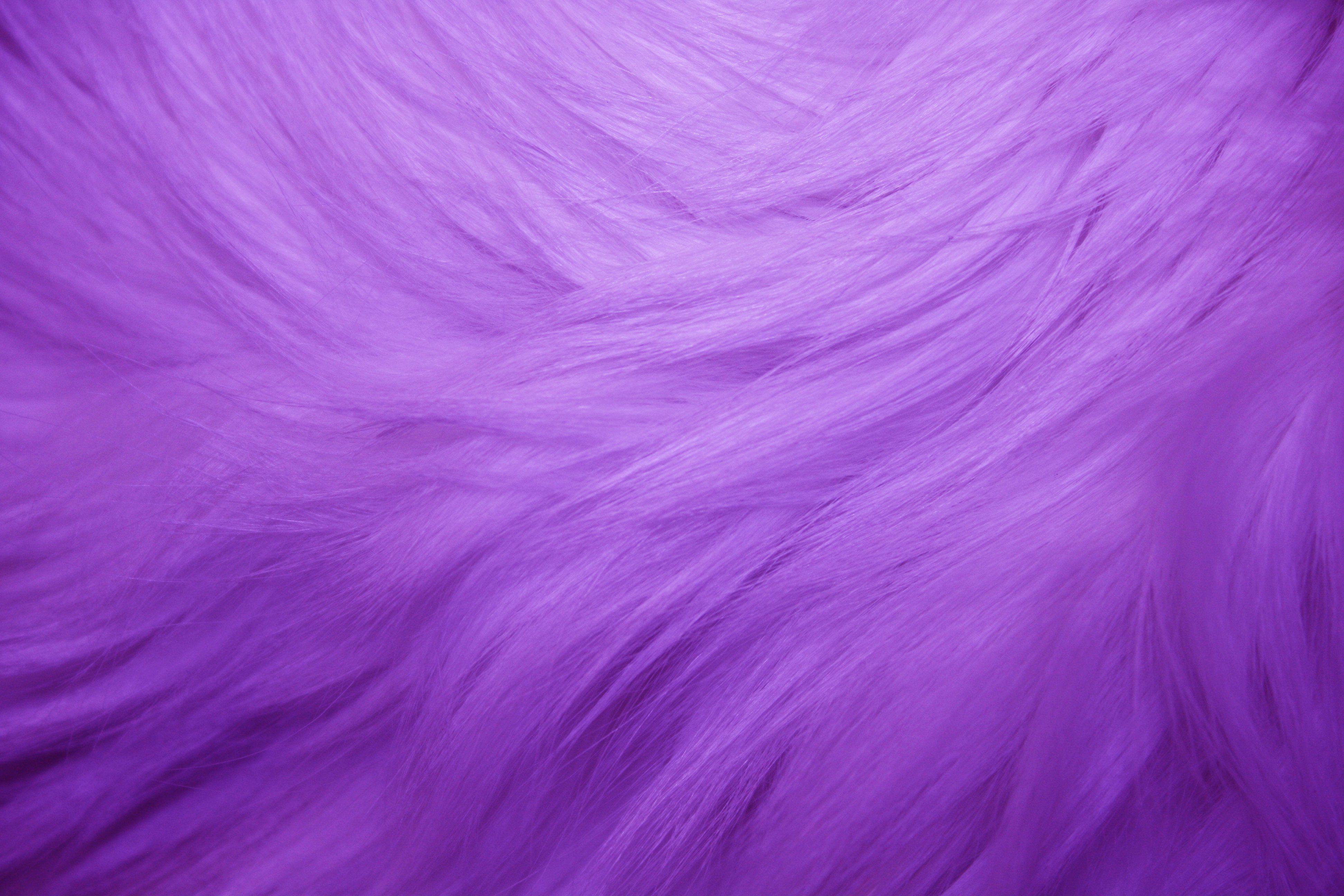 Purple Fur Purple Fur Texture Free High Resolution Photo Dimensions 3888 Fur Textures Fur Background Pink Fur Wallpaper
