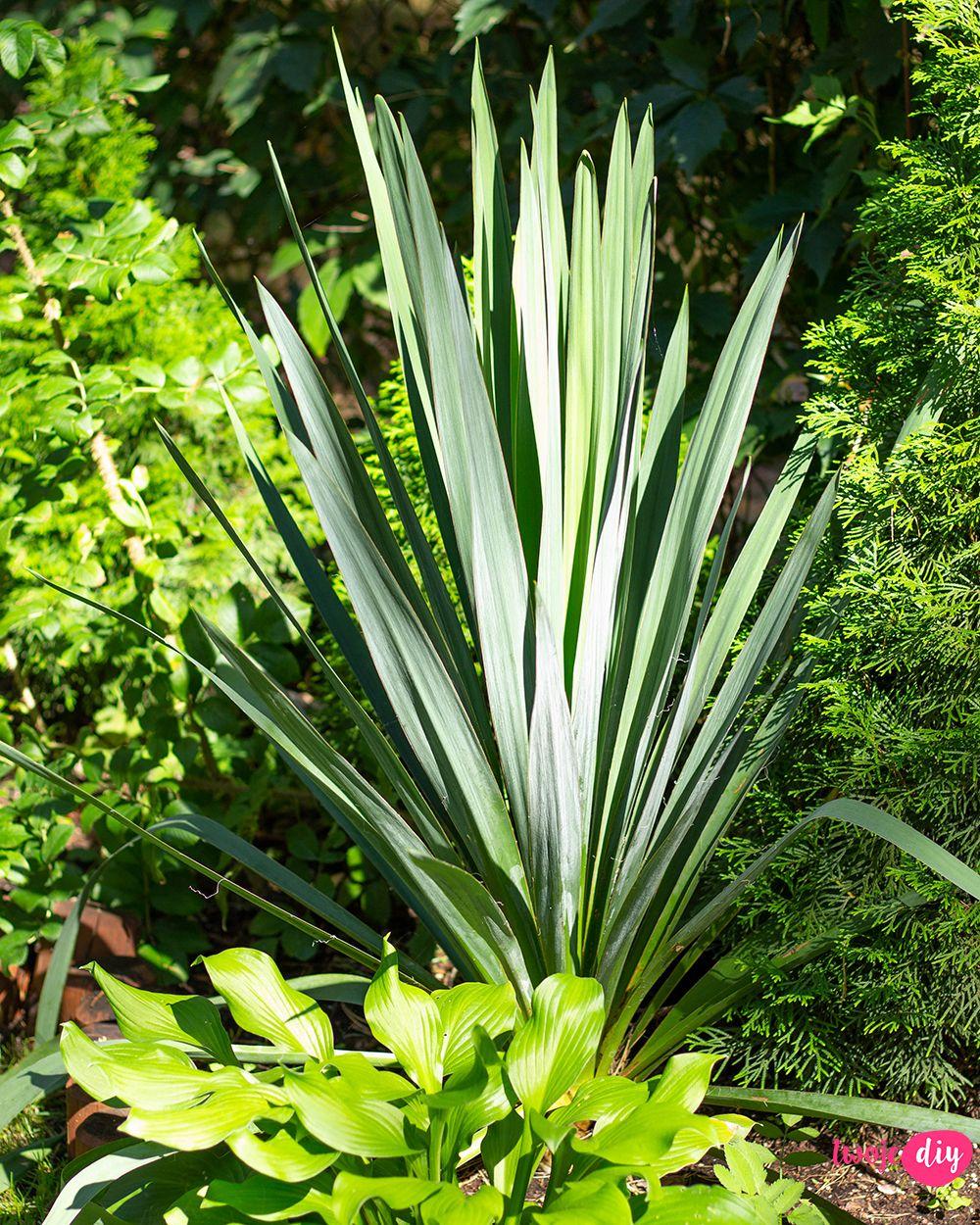 19 Roslin Ktore Beda Rosly W Zacienionych Miejscach Twoje Diy Plants Outdoor Gardens Fairy Garden