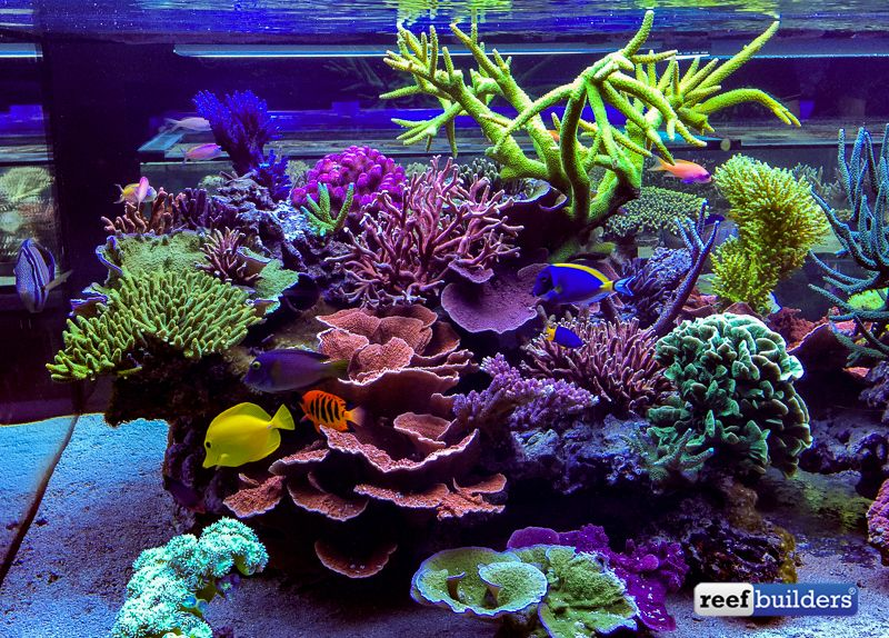 The supernatural reef tank of seabox aquarium reef for Saltwater fish tank