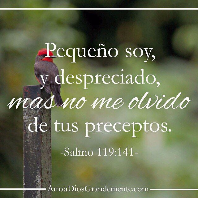 Versiculos De La Biblia De Animo: Salmo119:141 Pequeño Soy Yo, Y Desechado, Mas No Me He