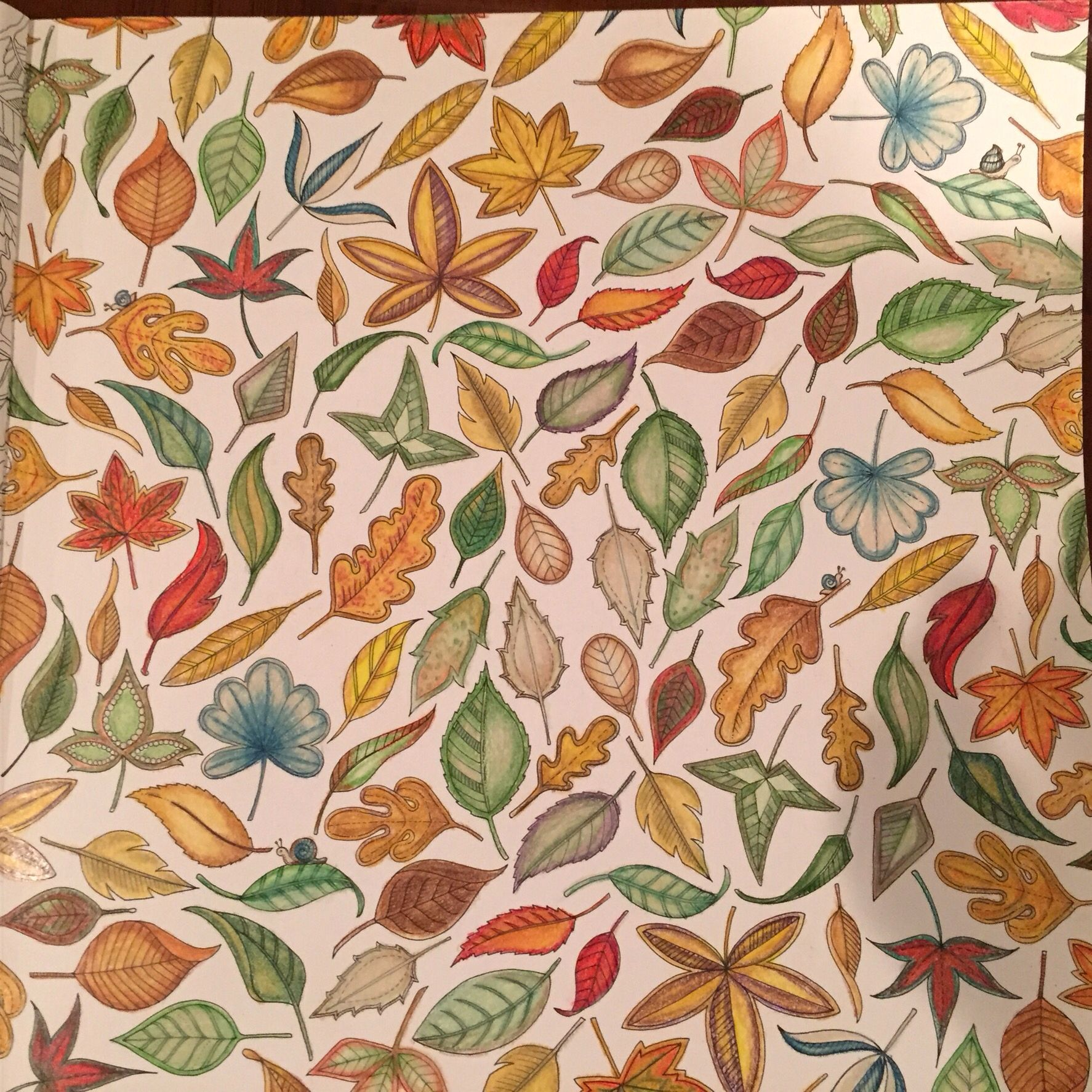 Secret Garden Coloring Book by Johanna Basford - Autumn Leaves and Snails - Colored by Suzanne Balter
