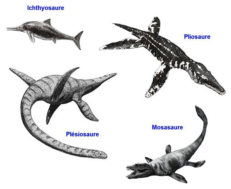 Reptiles marins dinosaurios pinterest dinosaures - Dinosaure marin carnivore ...