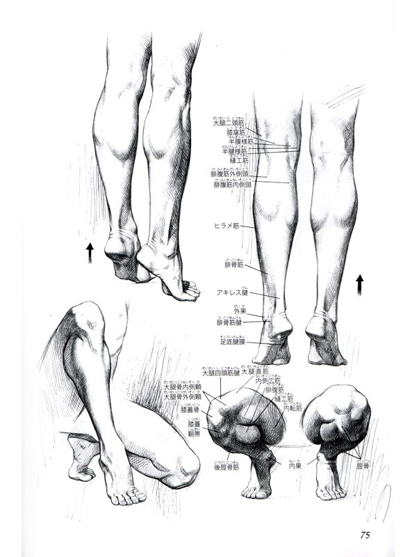 Human Anatomy - Artistic Drawings of the Human Bones and Muscles ...