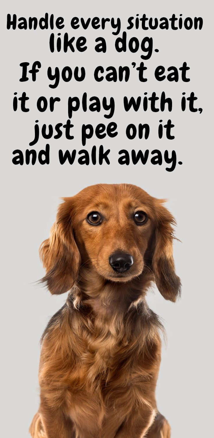 The Top 14 Funny Dog Quotes To Put A Smile On Your Face Smile