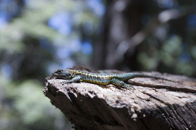 蛇の脱皮の理由とは 爬虫類の脱皮は健康のバロメーター 爬虫類 トカゲ 脱皮