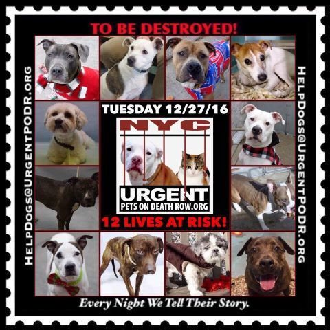 Die 12 27 16 Noon Nyc Urgentpodr Org Dogs Dog Adoption Animal Shelter