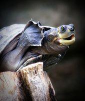 Photo of Hallo Wie von Animal Planet aus gesehen Dieses Bild hat 0 Wiederholungen. Autor:…
