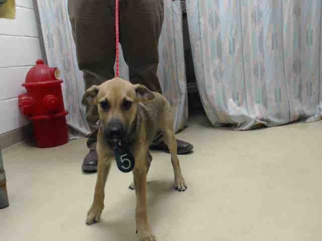 Max Houston Texas Petharbor Com Animal Shelter Adopt A Pet