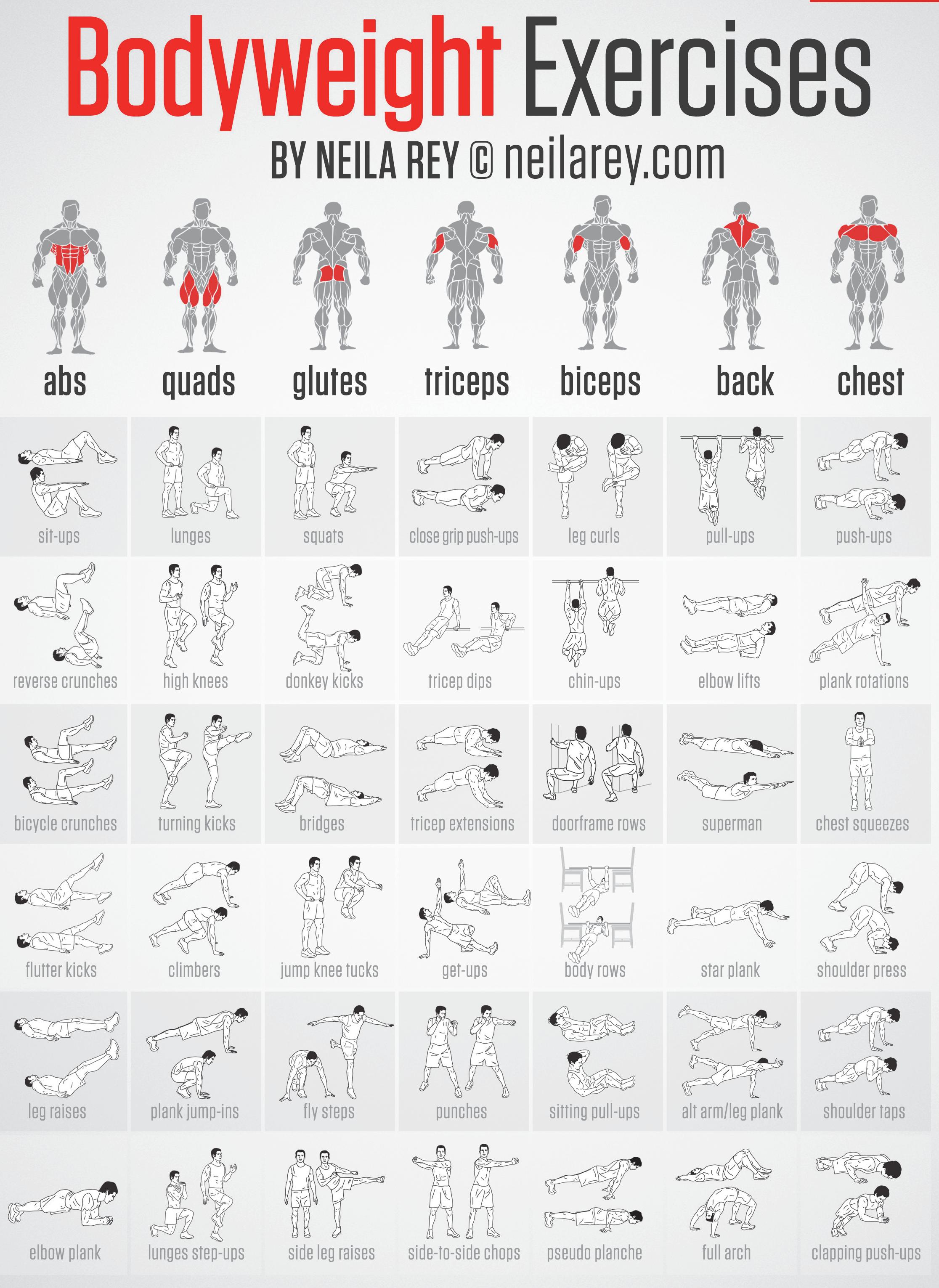 medium resolution of workout board workout belt workout abs workout exercises weight exercises fit