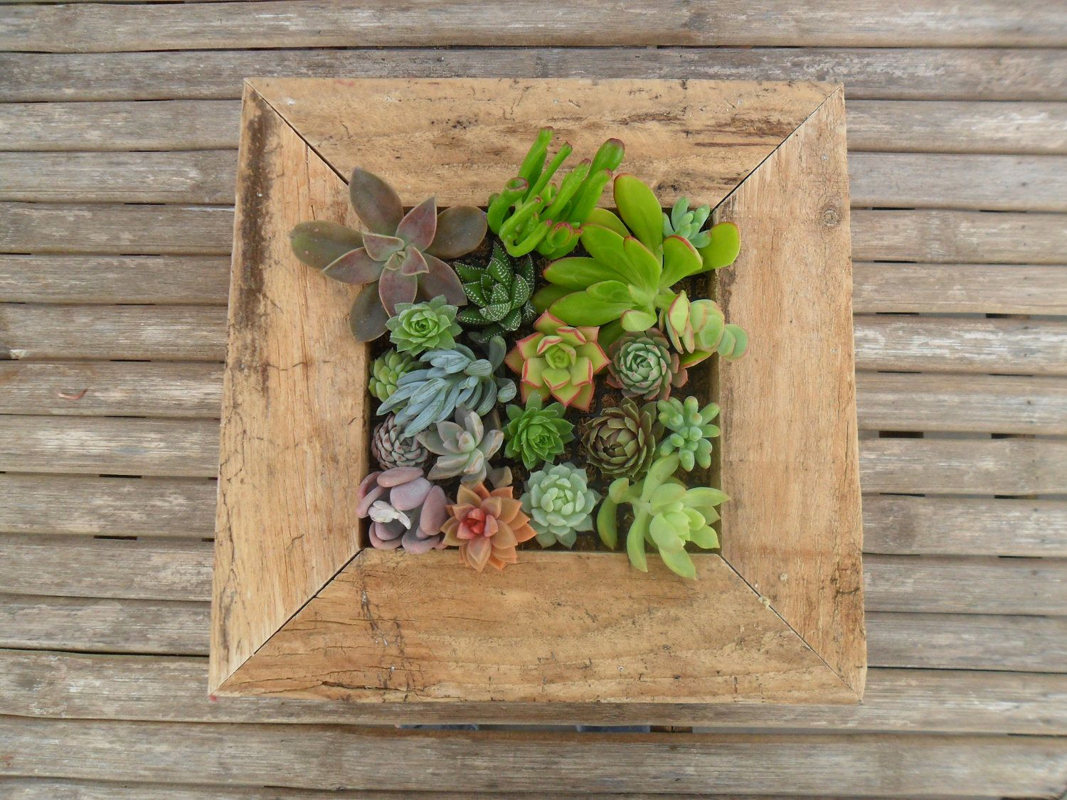 Large rustic wall art kit comes assembled with soil and moss