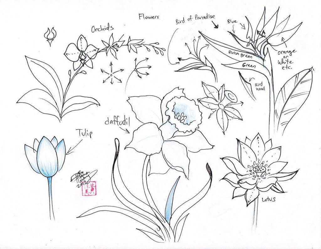 how to draw a flower dr odd zeichnen dibujos de flores dibujos und anatomia dibujo. Black Bedroom Furniture Sets. Home Design Ideas