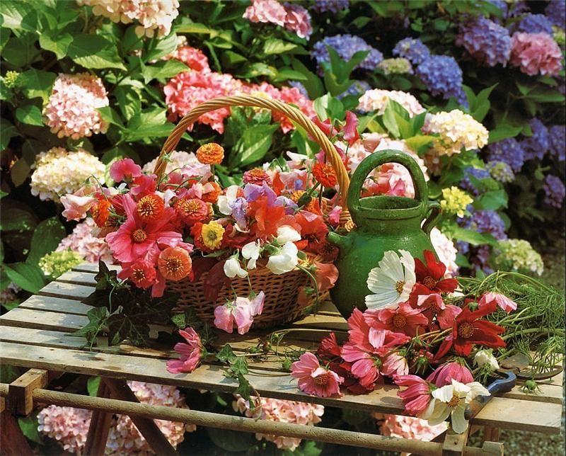 картинки с июльскими цветами хозяин