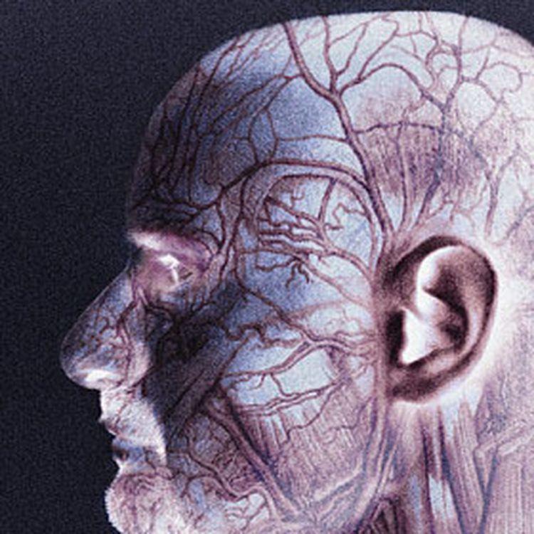 Serotonin & Blood Flow in Fibromyalgia & Chronic Fatigue Syndrome