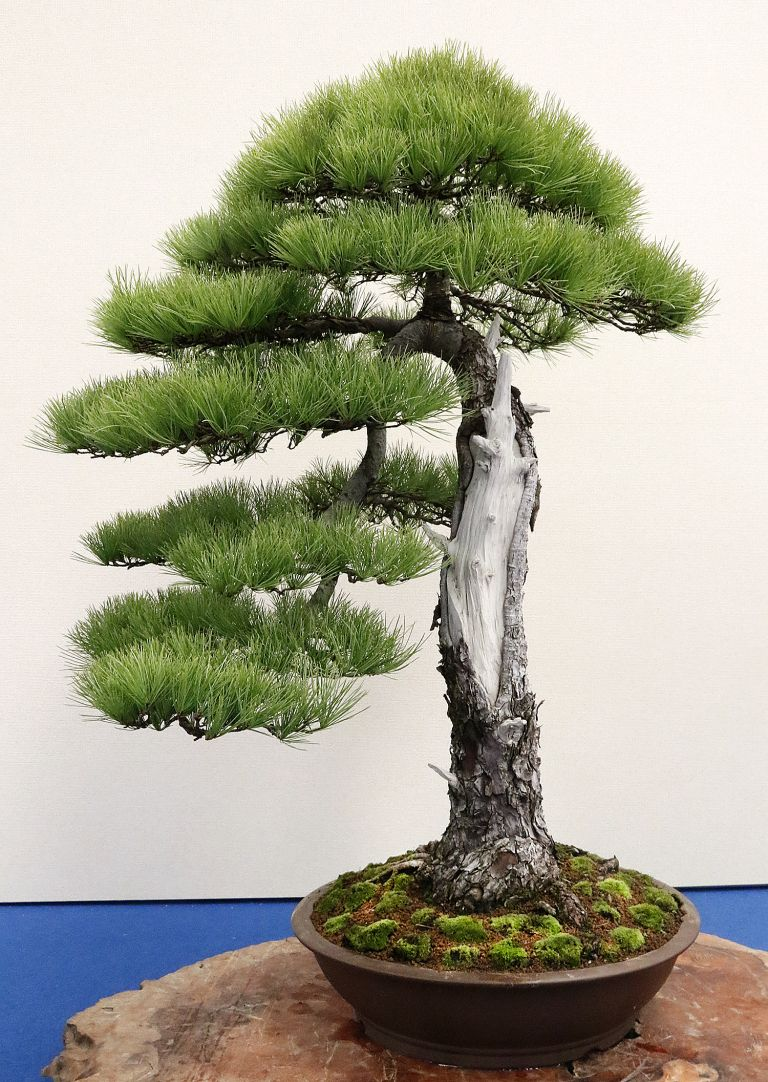 Taiwan 2017 BCI Convention & 14th Asia-Pacific Bonsai & Viewing Stone Convention & Exhibition– Part 5 – Valavanis Bonsai Blog