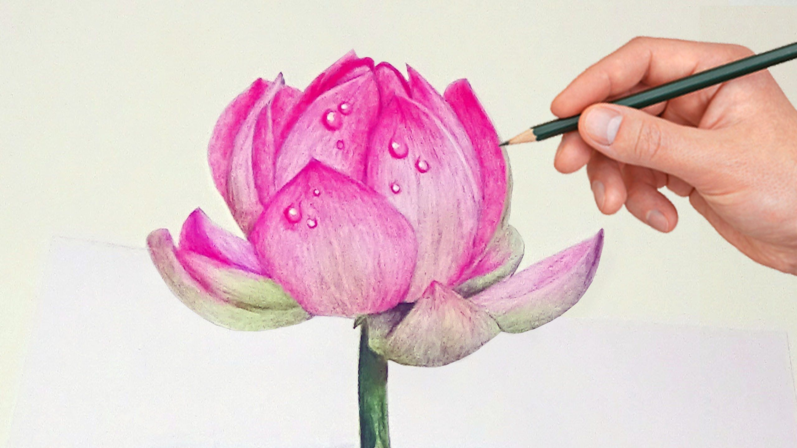 748 Drawing A Lotus Flower With Simple Colored Pencils