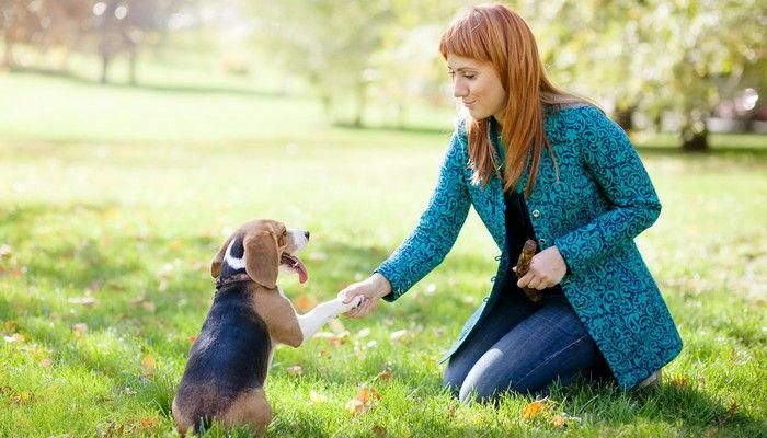 Prolific analyzed dog training for agility Dog training