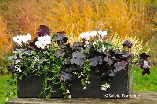 Des Jardinieres D Hiver Bien Fleuries Natura Jardinieres