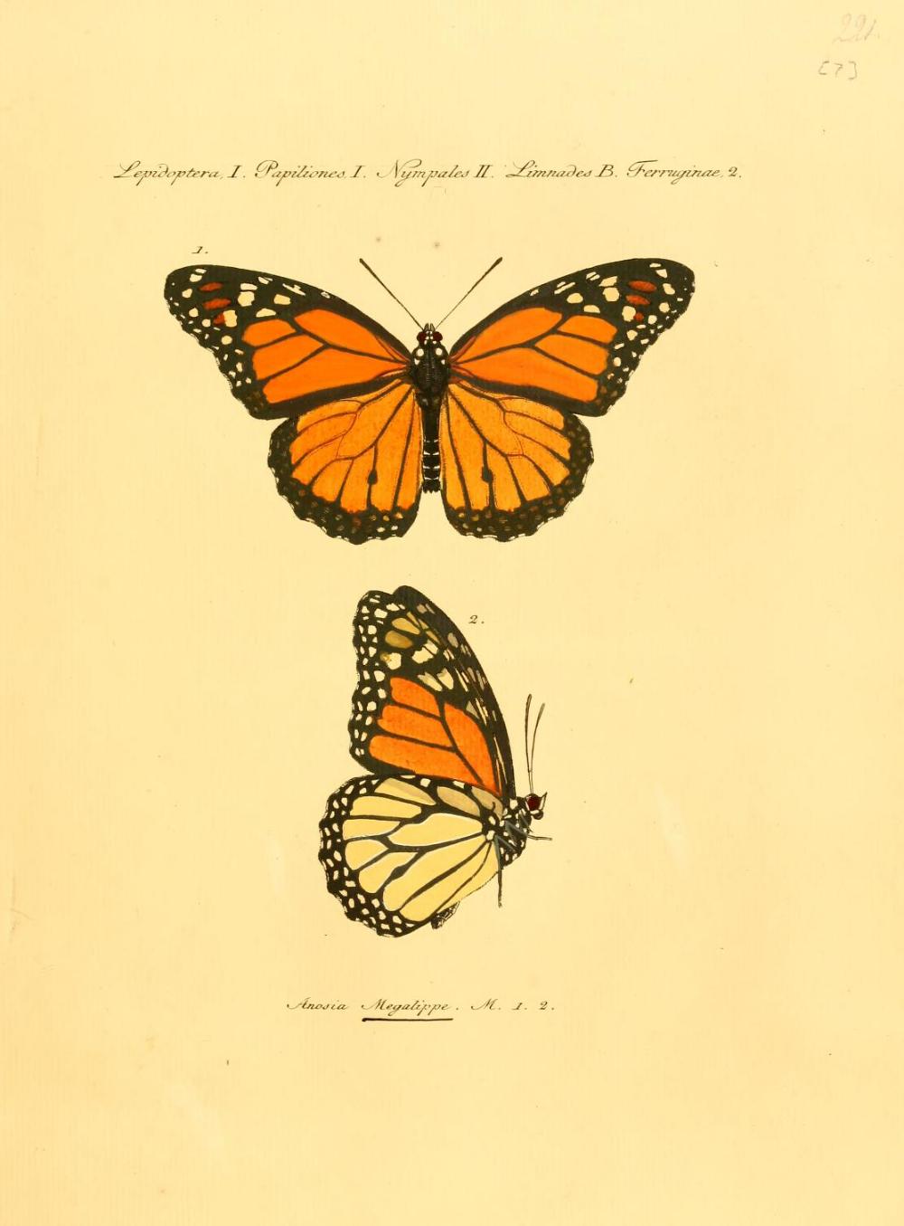 Sammlung exotischer Schmetterlinge : Hübner, Jacob, 1761-1826 : Free Download, Borrow, and Streaming : Internet Archive