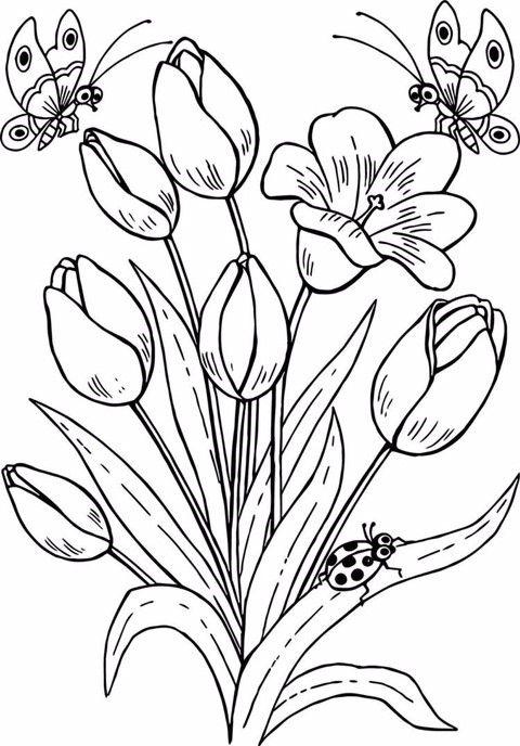 Butterfly Coloring 엄마랑 아이랑 같이 색칠놀이하며 즐거운 시간 보내요 네이버 블로그 Bunga Tulip Gambar Keren Cara Menggambar
