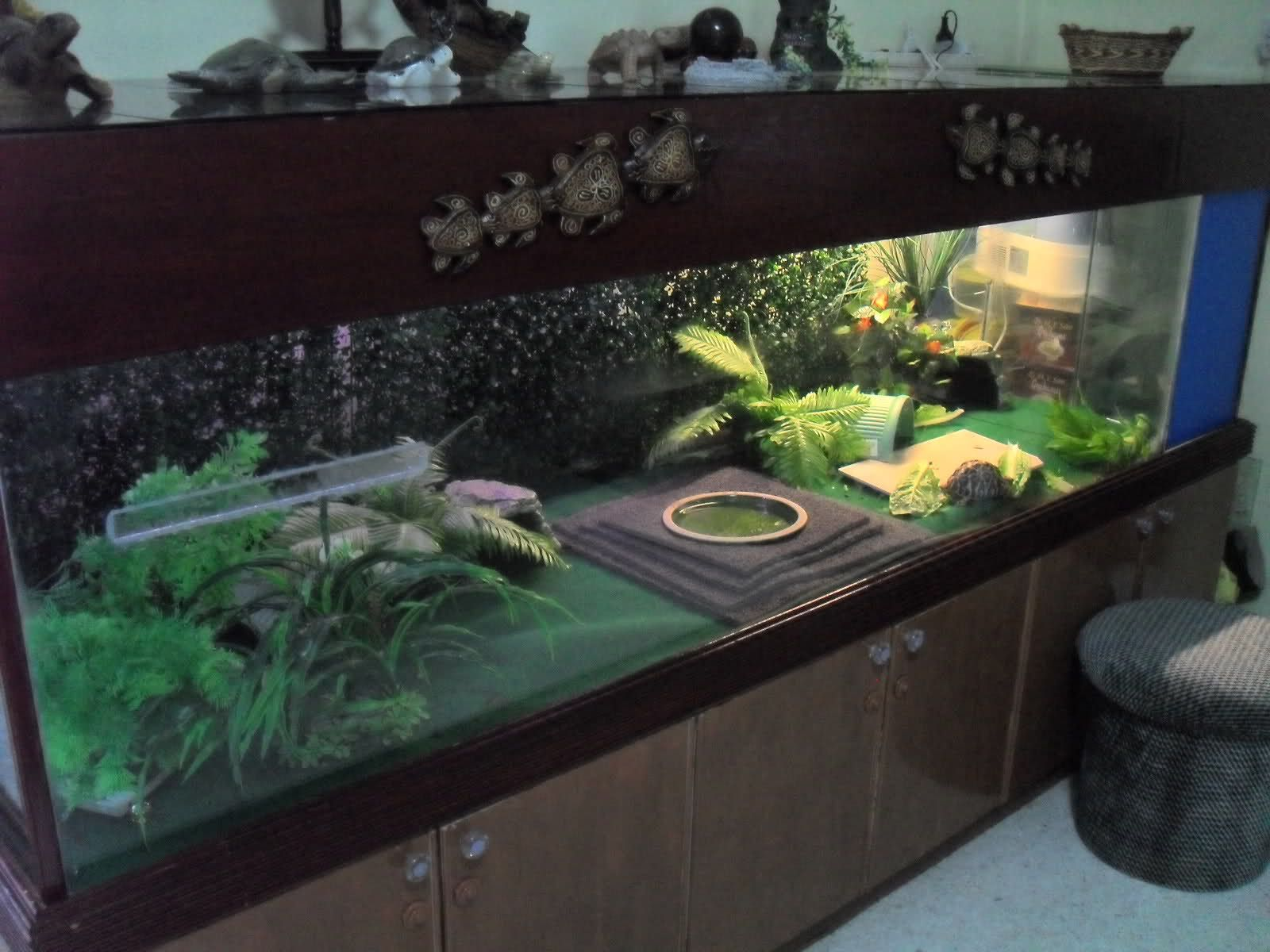 Turtle Tank Decor 17 Best Images About Tortoise On Pinterest Fake Rock Wall