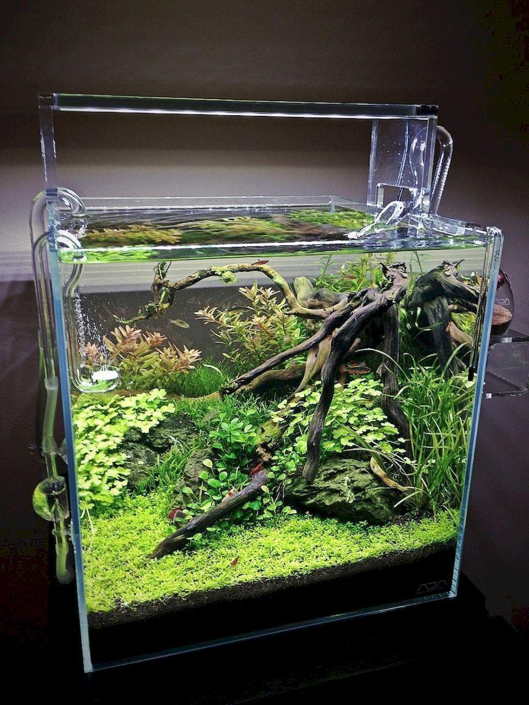 Pin by konto on Aquazone in 2020 | Aquarium fish tank ...
