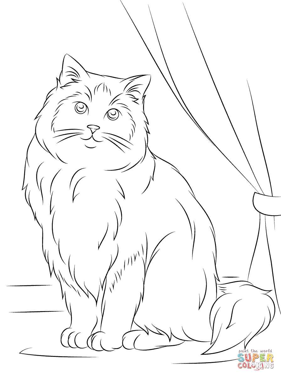 Superb Ragdoll Cat Coloring Pages.png (895×1200)