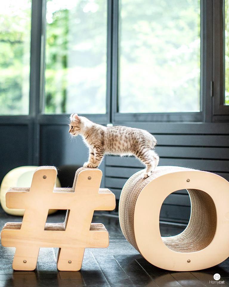 Griffoirs O Homycat Petit Felin Grand Chat Types De Chat