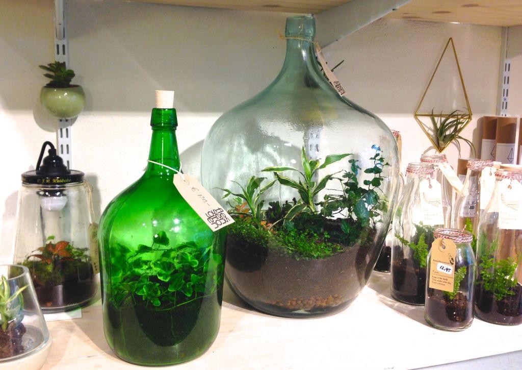 Diy terrarium maken met wildernis roomed diy for Bouwen en interieur
