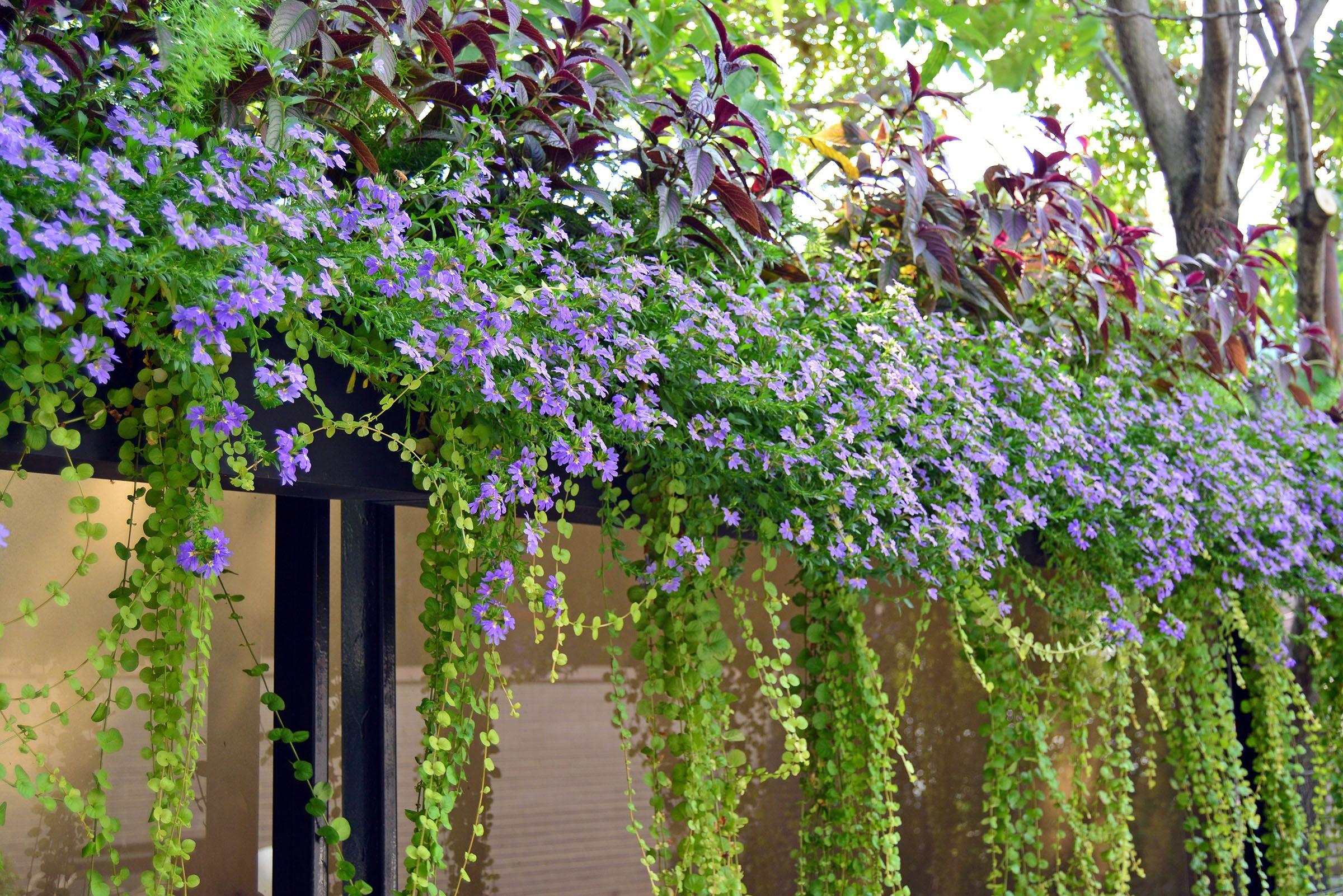 Summer Annuals   Window Box   Planter   Container   Railing   Urban   Garden   Landscape   Design   Ideas for Summer