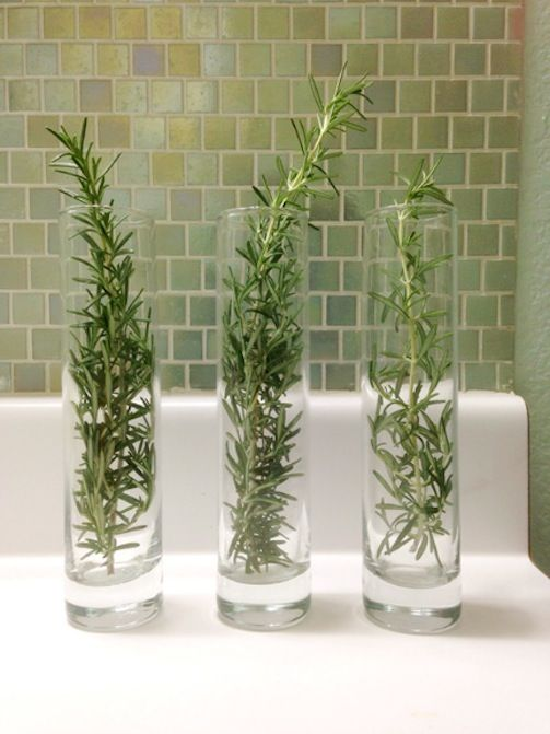 Use Herbs To Freshen The Air Place Fresh Rosemary Or Lemon