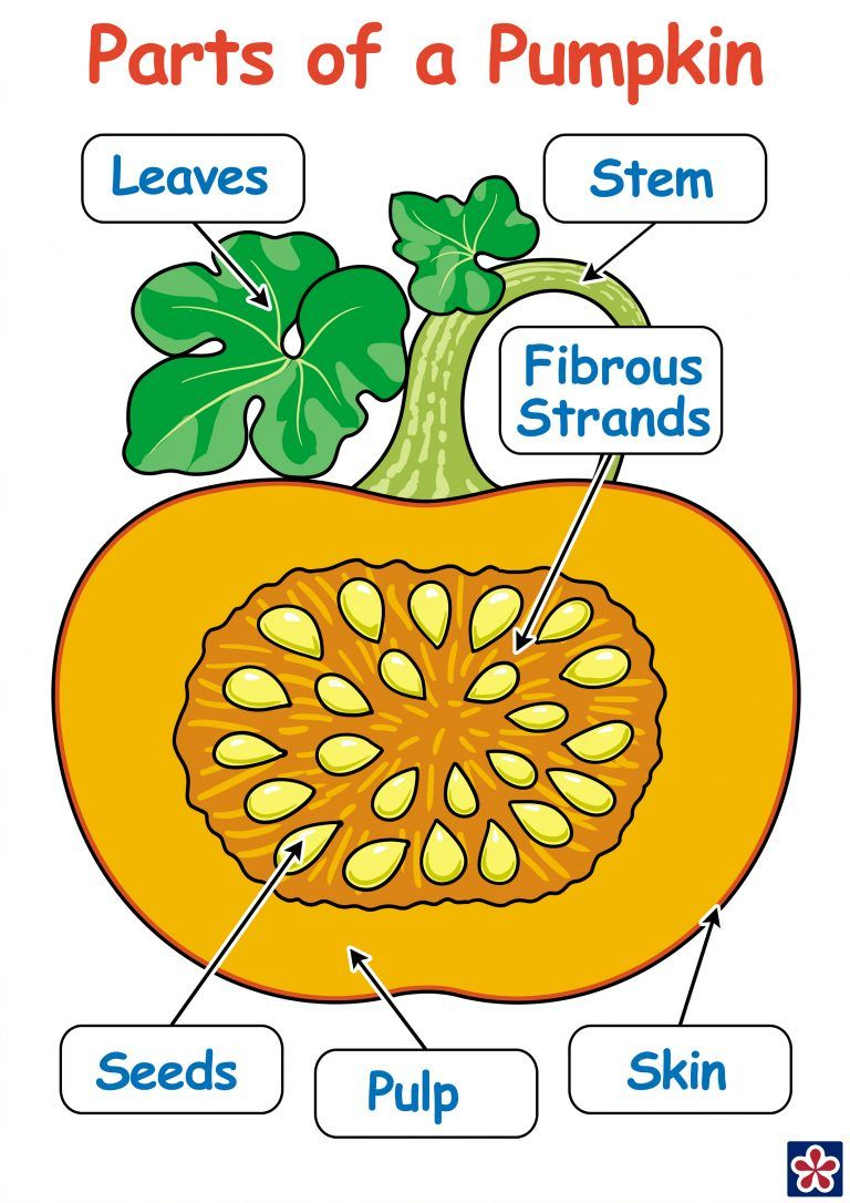 Fresh Ideas - Free Printables of the Parts and Lifecycle of a Pumpkin