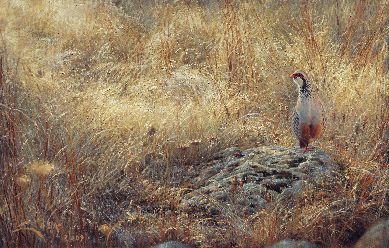 partridge in august wildlife art of manuel sosa paintings and