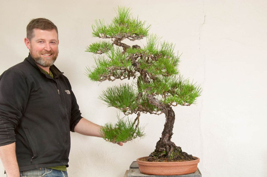 Bay Island Bonsai Dupuich Bonsai Island Plants