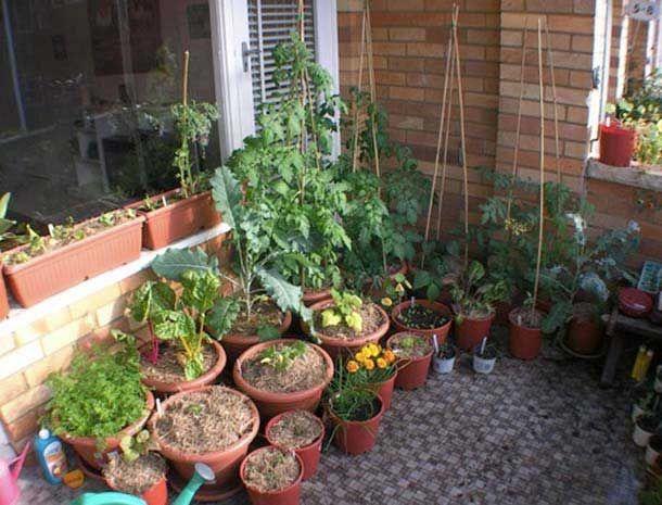 Gartenähnliche Balkone Garten, Gemüse anbauen, Obstgarten