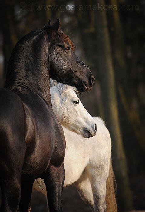 Pin di Lindi Perkins su Horse.   Pinterest   Asini, Il mio amore e ...