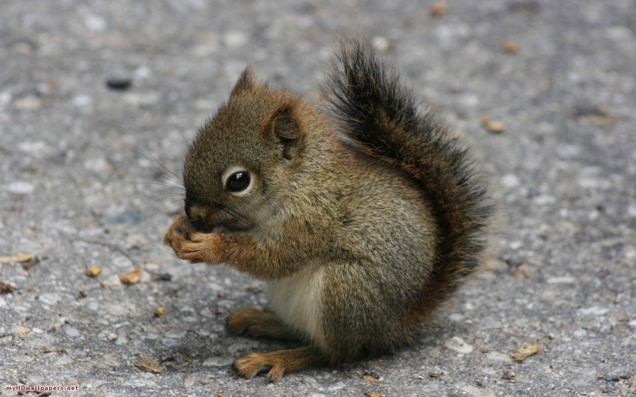 cute baby wild animals - Google Search