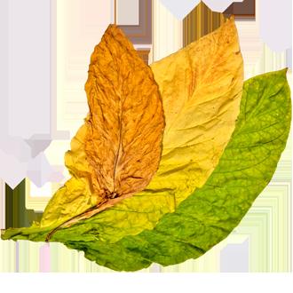 Tobacco Leaf Google Search