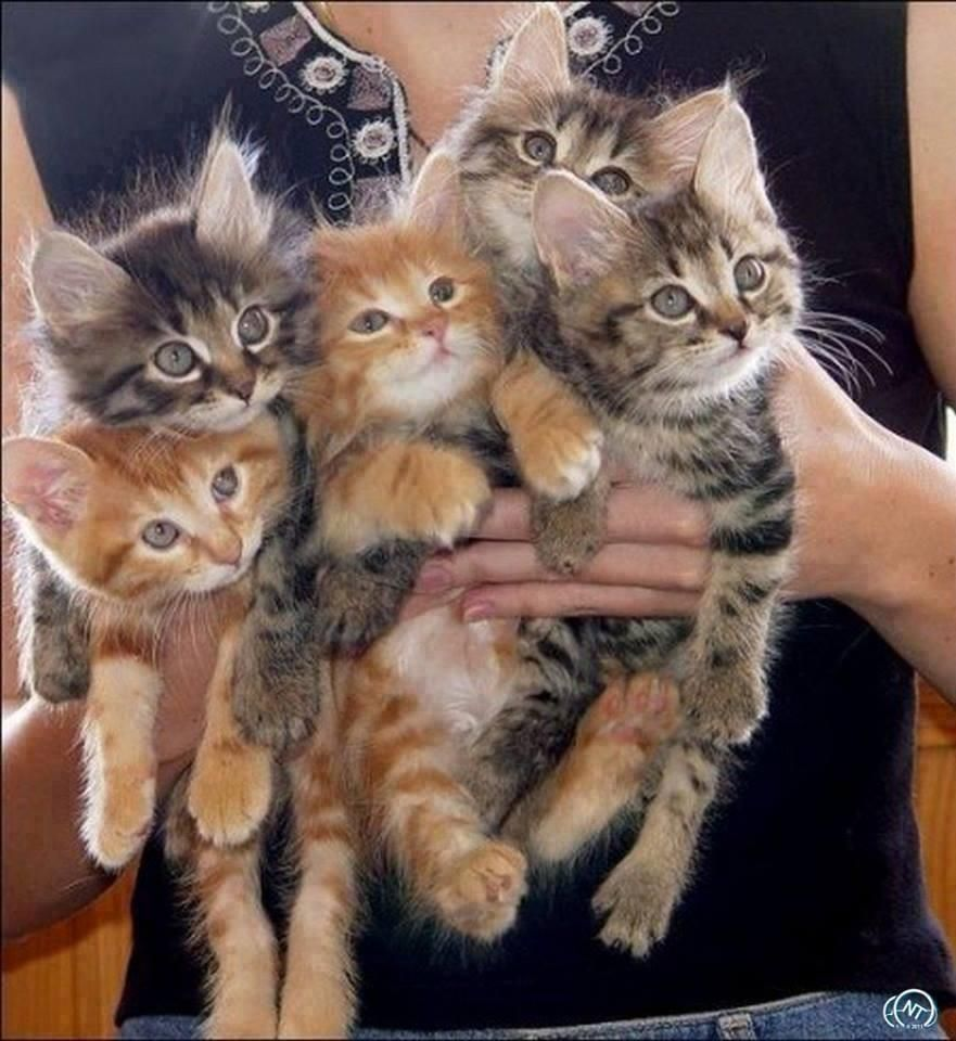 Charlie Change On Twitter Kittens Cutest Crazy Cats Cute Animals