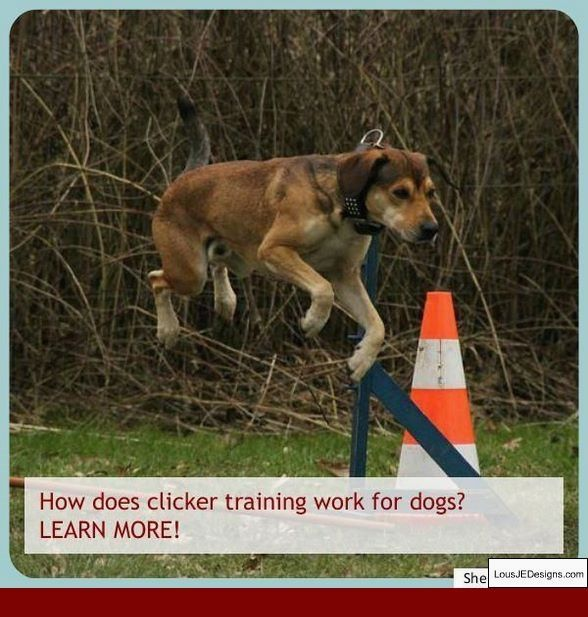 How To Train Your Dog To Stay Youtube And Pics Of How To Teach A